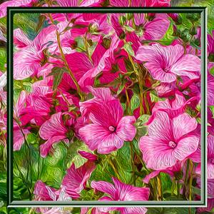 Flower-HDR-Oil Painting-Frame