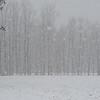 Snowfall along Limberlost Vigo County