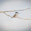 Goosepond FWA Birds, Wetlands, DNR, HRI