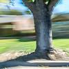 CarolCrosson_DrivePans_Wk45.6