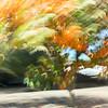 CarolCrosson_DrivePans_Wk45.12