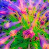 CarolCrosson_FlowersMacro_Wk27.1