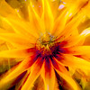 CarolCrosson_FlowersMacro_Wk27.32a