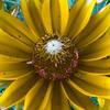 CarolCrosson_FlowersMacro_Wk27.31