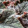 CarolCrosson_FlowersMacro_Wk27.2a