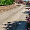 CarolCrosson_Roads_Wk21.15