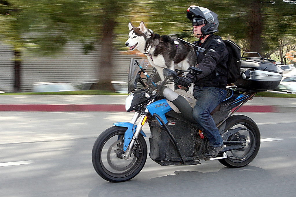 . Terry Hershner of Santa Cruz has traveled 25,000 miles--including across the country--with his 50-pound dog Charger sitting on his Zero electric motorcycle.  (Dan Coyro -- Santa Cruz Sentinel)