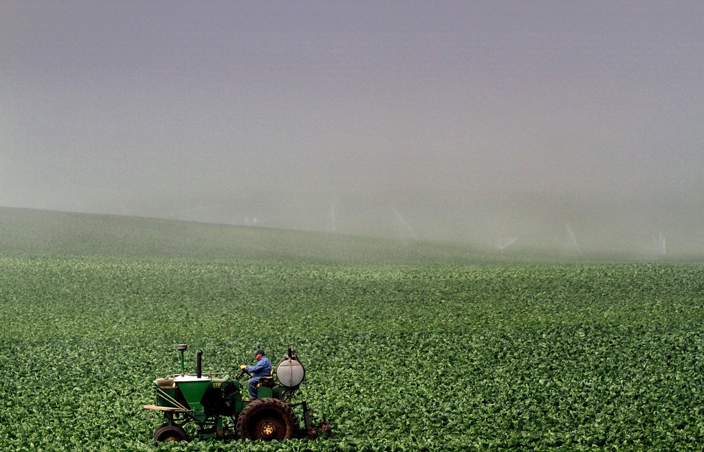 . Diffused morning sunshine illuminates an agricultural worker on a tractor as a thick fog bank covers the fields beyond along San Andreas Road Tuesday. Forecasts from a number of weather websites predict continued foggy mornings along the coast with temperatures nearing triple digits inland through the weekend.