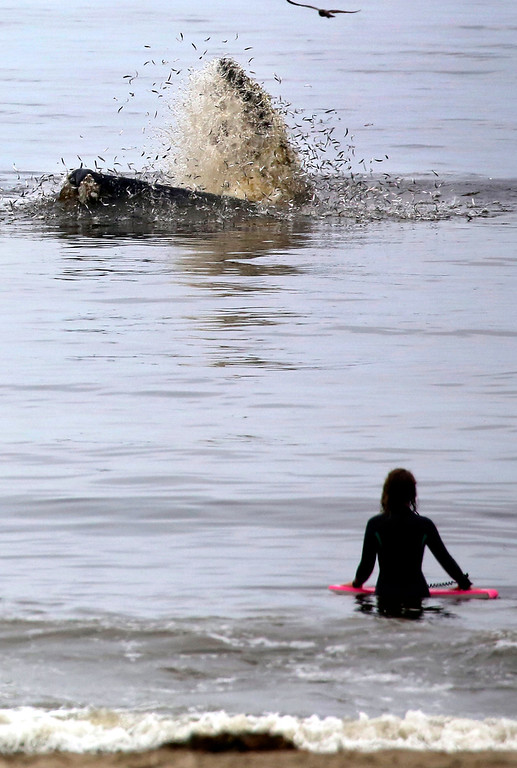 . Whales seen from Rio Del Mar State Beach 