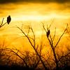 Bald Eagles Of the Apocalypse