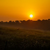 A deer jump across a foogy field at sunrise somewhere in Indiana.