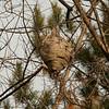 Bee's nest
