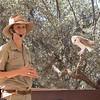 Bird program, barn owl, Alice Springs Desert Park, Northern Territory, Australia