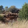 Alice Springs Desert Park, Northern Territory, Australia