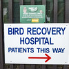 Whangarei Native Bird Recovery Center, New Zealand