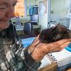 Kiwi, Whangarei Native Bird Recovery Center, New Zealand