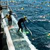 Snorkeling at the Great Barrier Reef, Queensland, Australia