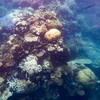 Great Barrier Reef from the glass bottom boat, Queensland, Australia