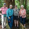 Daintree Rainforest, Queensland, Australia