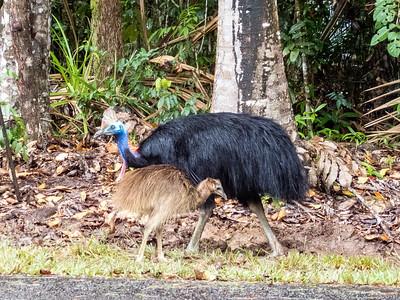 April 6 - Daintree Rainforest