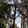 Trail to the Tessellated Pavement, Tasman National Park, Tasmania, Australia