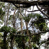 Tessellated Pavement trail, Tasman National Park, Tasmania, Australia