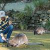 Our guide Darrin and Wallabys, Cataract Gorge Reserve, Launceston, Tasmania, Australia
