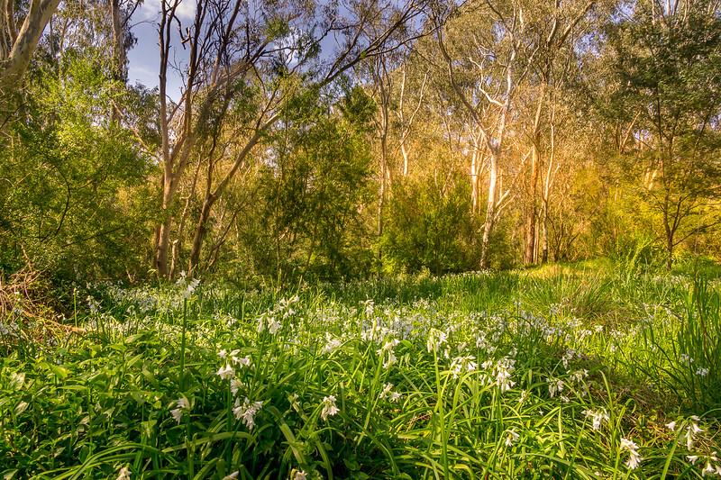 Yarra Meadows