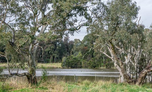 Banyule Flats Swamp #1