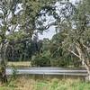 Banyule Flats Swamp