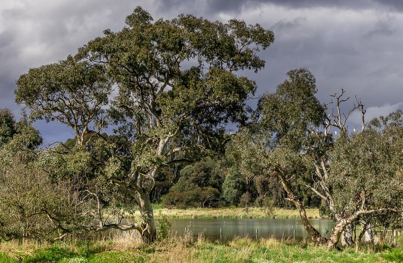 Banyule Flats Swamps