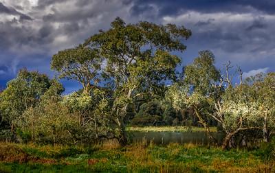Banyule Flats Swamps #3