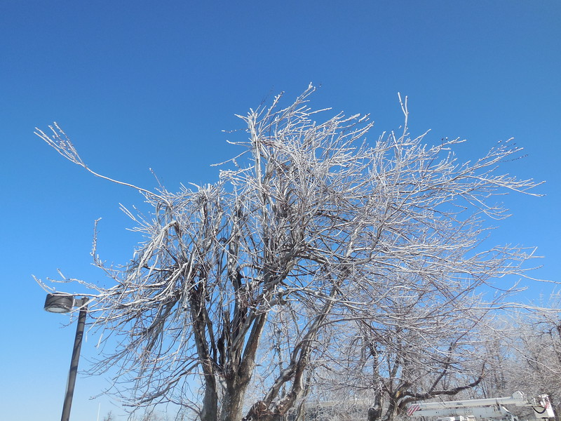 Then there is the scary sound when  it gets just warm enough to have the ice collapse off of  the branches