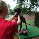 Carol Zangla poses with adoptable dog