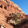Along the Scenic Drive, Capitol Reef NP, UT