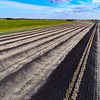 Pinto bean field - one pair of windrows left to harvest