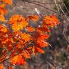 Oak leaves near Lake Miami