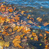 Leaves floating on the water's edge