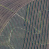 Raking Hay with some interesting patterns in the ground