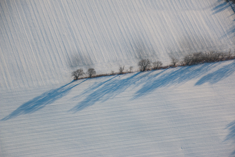 Trees and shadows, and snow textures
