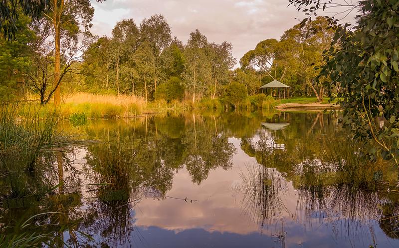 Koonung Reserve Billabong