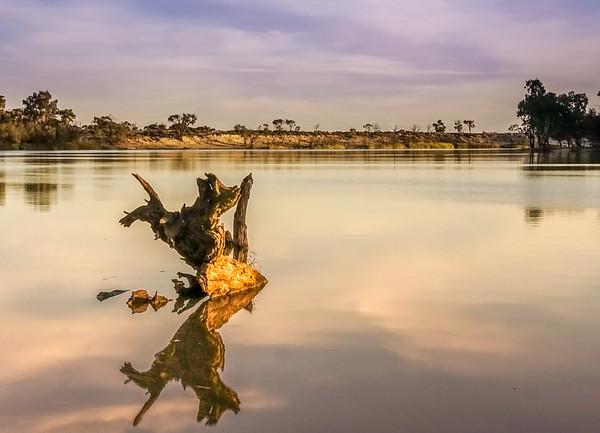 Reflected Stump