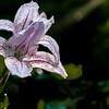 (Unknown) Backlit flower