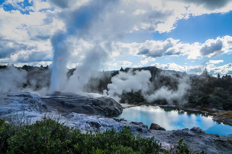 Geothermal Geyser Te Puia