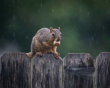 Nuts! It's raining.