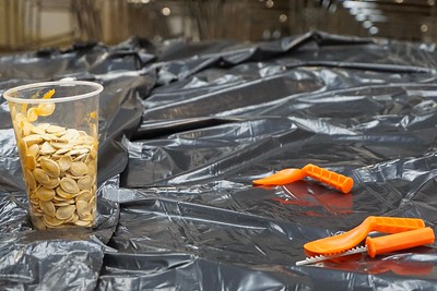 """Pumpkin carving can be messy! Students collected the pumpkin seeds and """"goop"""" in a cup."""