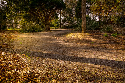 Golden Hour Trail
