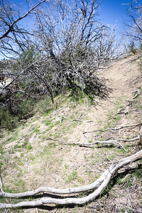 20170401039-Chilao, Hillyer, Silver Moccasin Trailwork