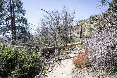 20170401045-Chilao, Hillyer, Silver Moccasin Trailwork