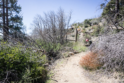 20170401046-Chilao, Hillyer, Silver Moccasin Trailwork
